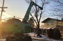 New SENNEBOGEN 718 Tree Care Handler Is A Crowd-pleaser For Abler Tree Company